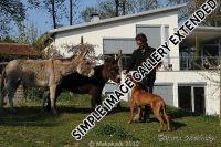 20110417_Makakadi_Mit unseren Eseln Simon Susi_0452