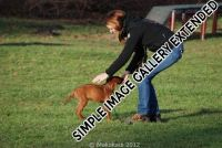20110105_Makakadi_Mit Frauchen in der Hundeschule_0517